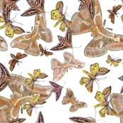 Dancing Moths on White