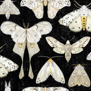 Moth Migration on Black