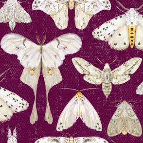Moth Migration on Aubergine