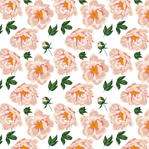 Peachy roses #1