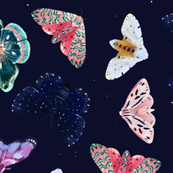 moths + stars