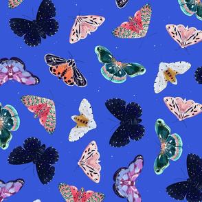 stars + moths