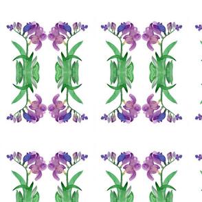 Purple Freesia Flowers