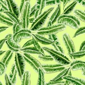 Palm Swings on Lime