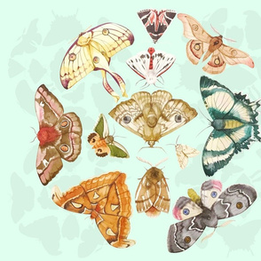 Moths illustration