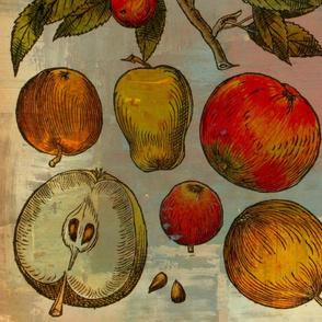 Botanical fruits