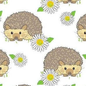 hedgehogs and daisies