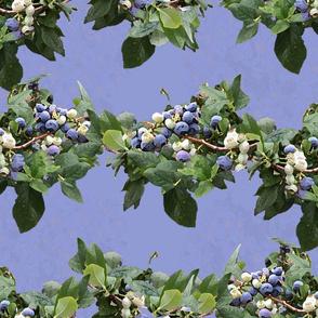 Blueberries (medium-large scale repeat)