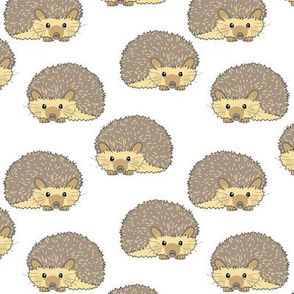 random hedgehogs on white