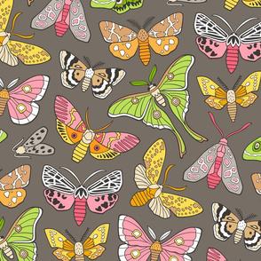 Moths on Warm Dark Grey