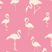 flamingos-01