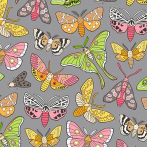 Moths on Grey
