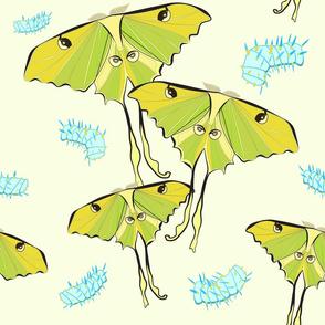 moths_Seaml_stock-01