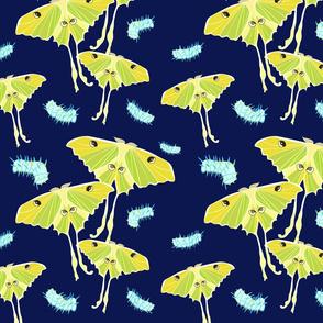 moths_Seaml_stock-04