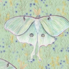Luna moth in Wildflower Field