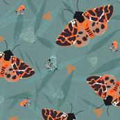 Tiger Moth Safari