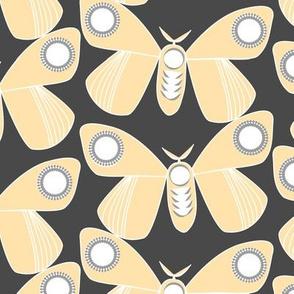 Sleeping Moths night