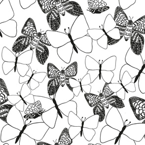 Black And White Moths and Butterflies
