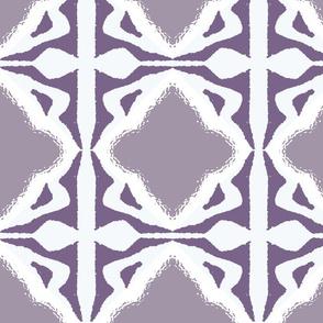 Salvia Lace
