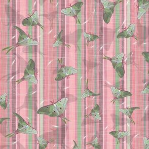 Silk Spinners - Moths | Pink + Green
