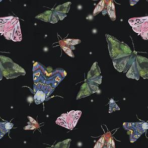 Moths Midnight