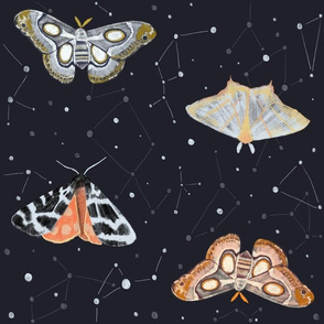 Midnight Sky Moths - Hand drawn moths against a night time sky filled with constellations and stars