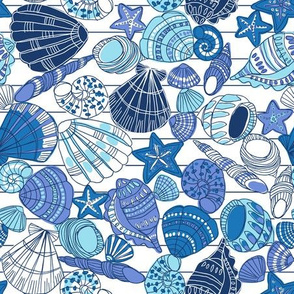 sea shells handdrawn