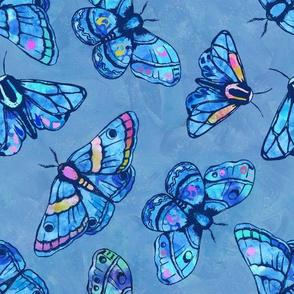 Marvelous Moths
