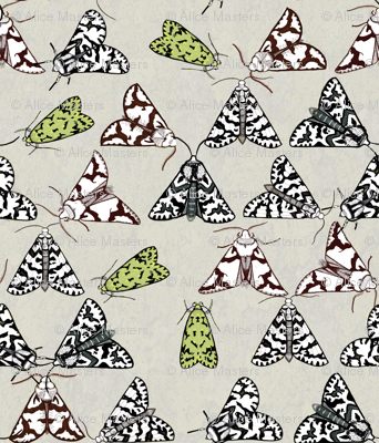 Rliking_the_lichen_moths_preview