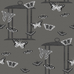 Grayscale Moths with Lantern