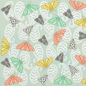 Moths in Paisley