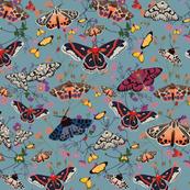 Moth garden