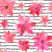 a parade of pink poinsettas with stripes