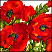 Bold Poppies with Border