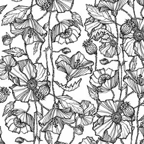 Hand-Drawn Poppies in Black & White