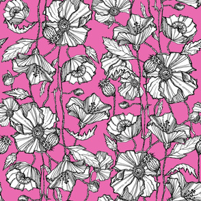 Hand-Drawn Poppies in Bright Pink