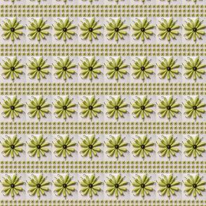Banana Pepper Floral Stripe 2019