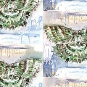 Green carpet moth-ed
