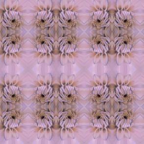 herkkakukka