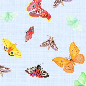 half drop moths on light blue linen