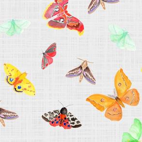 half drop watercolor moths on light grey linen | large scale