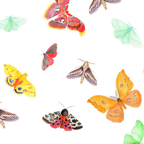 half drop watercolor moths on white | large scale