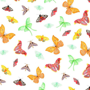half drop watercolors moths on white | small scale