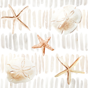 Neutral Beach Starfish and Sand Dollars