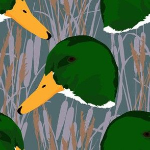 Mallard Duck Marsh