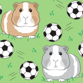 guinea pigs and soccer balls