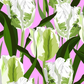 parrot tulips white on pink - large scale