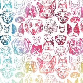 dogs - rainbow