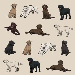 For Labrador Retriever Lovers