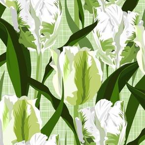 green spring - white/green parrot tulips
